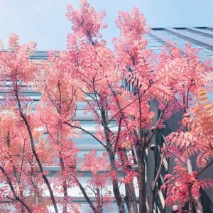 彩葉~iroha~