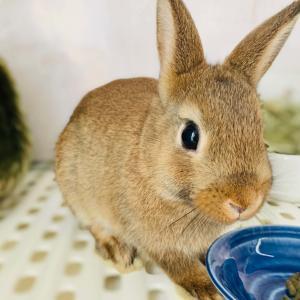 ウサギのちまき日誌