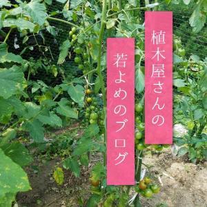 大阪高槻市植木屋さんの若よめブログ