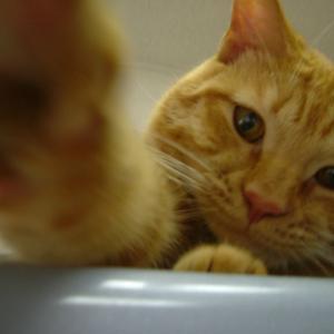 酒猫ブログ(「酒と猫の日々」改め)