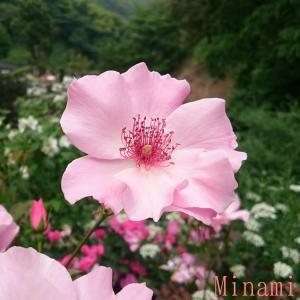 Minamiの恋愛メモリー