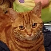 セキスイハイムのパルフェで猫と暮らすブログ