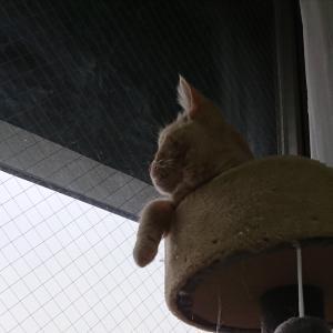 ☆猫と私☆田舎でゼロから再出発