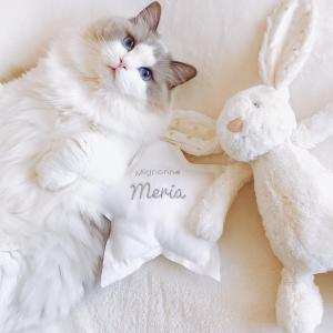 I'm fluffy cat