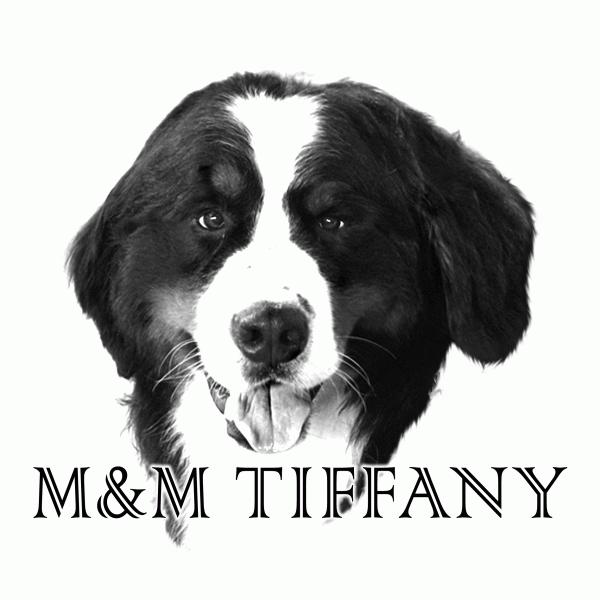 バーニーズマウンテンドッグブリーダー M&M TIFFANY