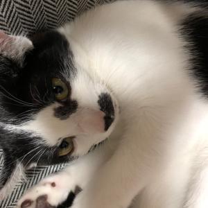 マネーの猫ブログ