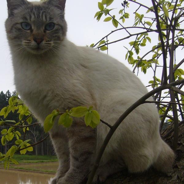猫たちと質素な生活