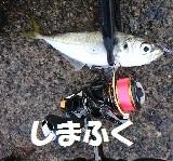 しまふくのちょっと気になる釣り日記