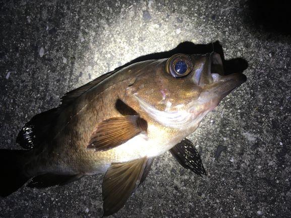 孤独な釣り人さんのプロフィール