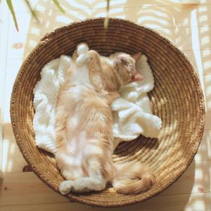 4匹の靴下猫との暮らし