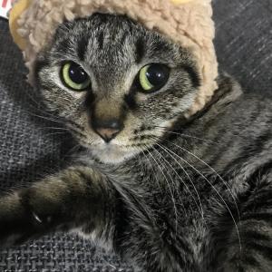 猫好き 新米ママの育児日記