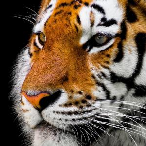 タイガースブログ