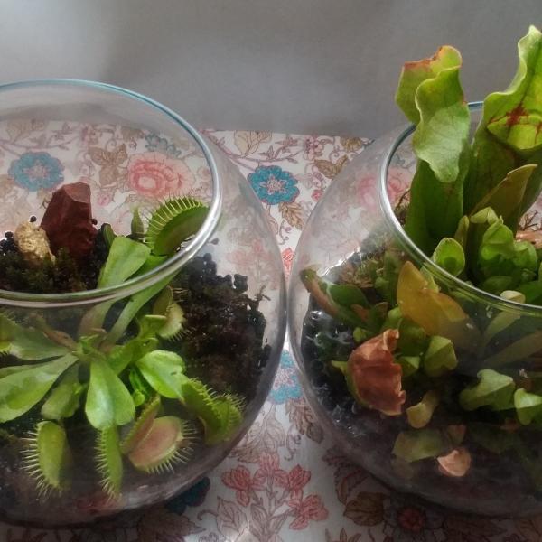 I LOVE @ 食虫植物