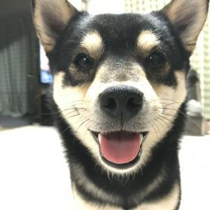 動物恐怖症夫と動物アレルギー妻のドタバタ愛犬生活