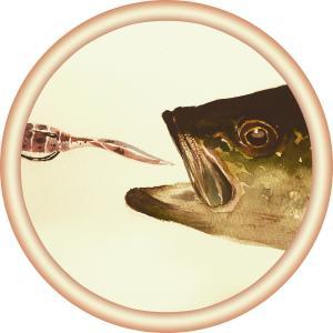 僕の釣り日記