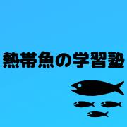 熱帯魚の学習塾