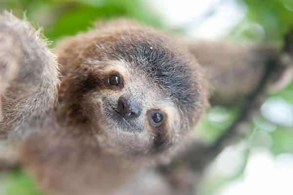 Slothのように生きたい。さんのプロフィール