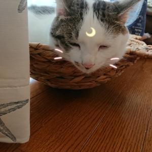 ゆゆゆ三姉妹と2匹の猫