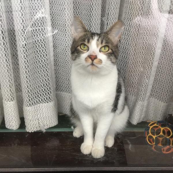 開運・幸運を呼ぶ、招き猫になりたい
