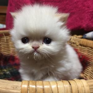 魔法のホーキ☆犬と猫 殺処分ゼロ!私くらいの人が数人いれば県内ゼロすぐできる☆要らない家ください