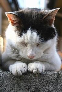 No cat, No life !
