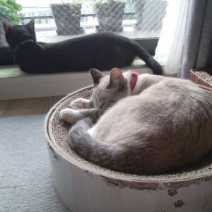 50歳からの猫暮らし
