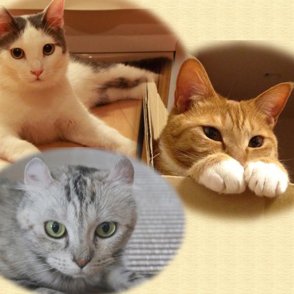 蒼い海とよもぎまんぢゅう〜あずき&こふく&よもぎの猫まみれ日記〜