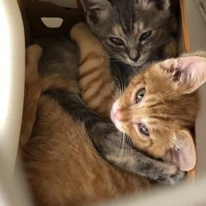 地域猫サポート野良猫を減らす会
