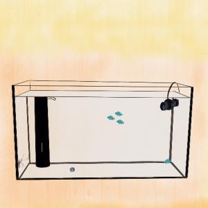 初心者の海水魚水槽