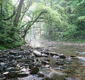 秋田の渓と山の恵み
