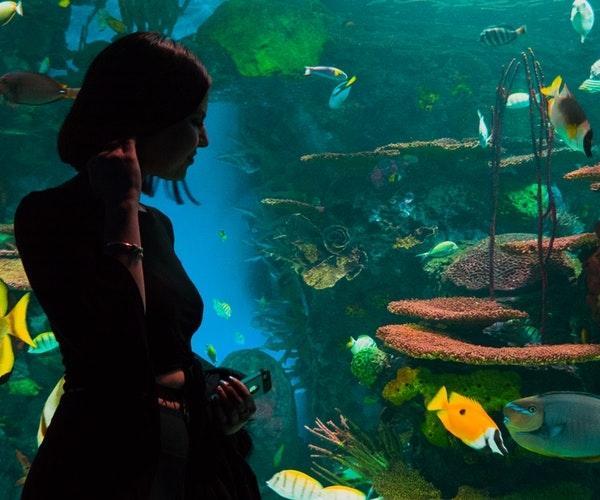 珊瑚主婦の美髪通信