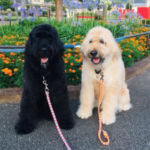 フランダースの犬 ❤︎わんわん!アンジーとレイチェル❤︎
