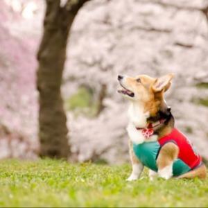 犬猫好きの為のブログ☆