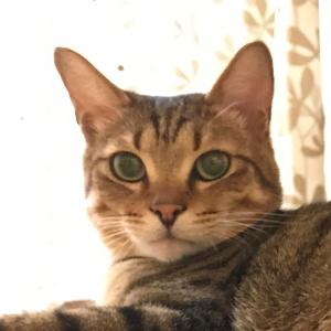 ヴァーチャルな猫カフェ ねころび cat cafe NecoLove