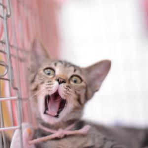 ねこらいくnenetの里親さま募集猫たち