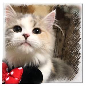 ウチの猫( *˘ ³˘)♥️みぃ