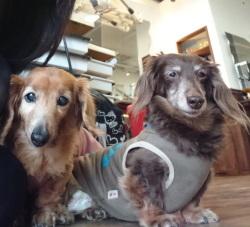 ハイシニア犬アンリと杏子 マイペースDAYS
