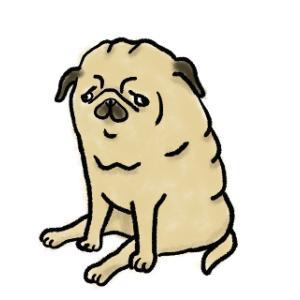 元保護犬パグのやり直し人(犬)生