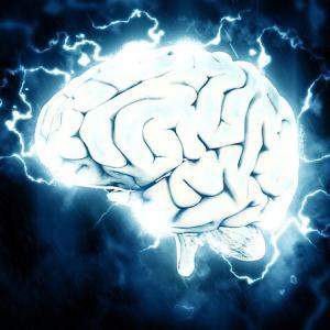 電脳の中の脳