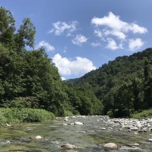 渓流フライ&ルアーの釣行日記
