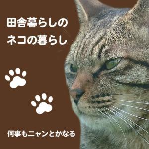 田舎暮らしのネコの暮らし-キジトラ猫のメタル-