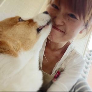 老犬のきもち♡ 老犬ブログお悩みお役立ち情報発信