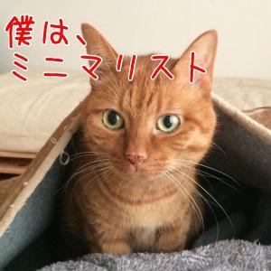 うぴ子と猫のミニマルライフ