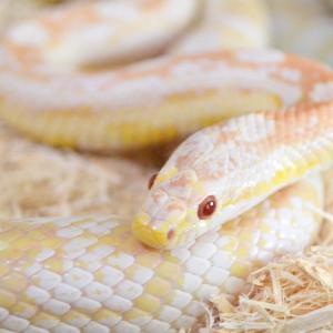 ねむたい爬虫類ブログ