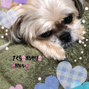 愛犬と暮らすkoshi〜母恵夢ブログ
