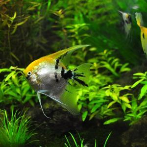 金魚・熱帯魚・海水魚を飼育しよう!