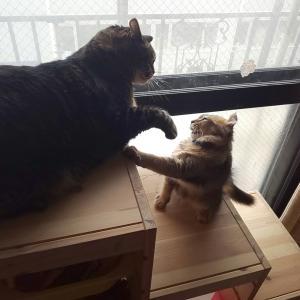 猫とクワカブ、その他の記事をたまに書きます。