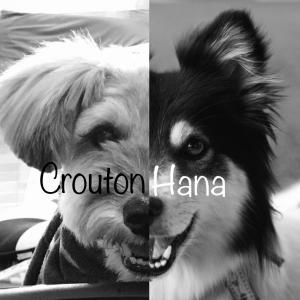 ハナキャン!〜愛犬ハナのブログ〜