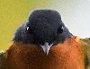 Mr.Ks Wild Bird Blog