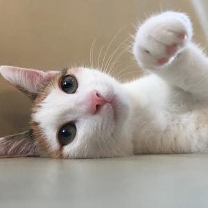三毛猫よろちゃんパクパク日記